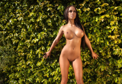 mareeva, shaved pussy, pussy, tanned, boobs, big tits, nipples, brunette, fake boobs wallpaper